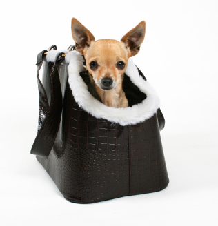 Chihuahua Carrier