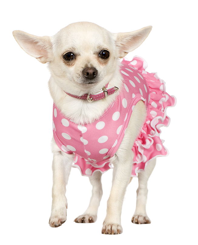 Chihuahua Polka-Dot Dress