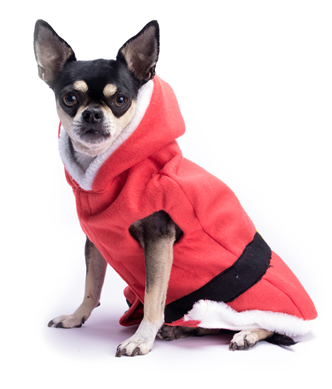 Red Chihuahua Jacket