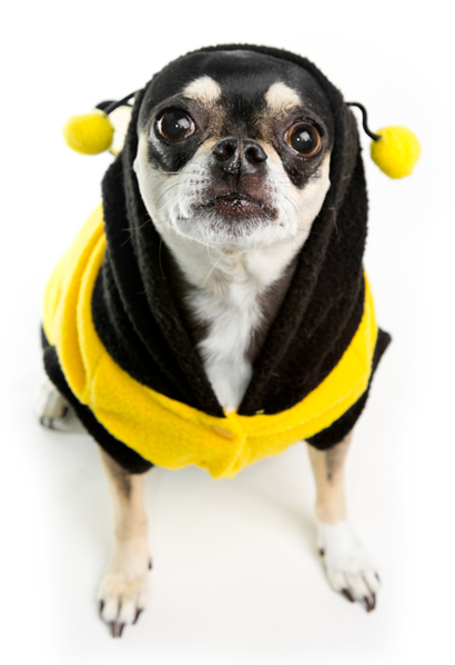 Chihuahua Ladybug Costume