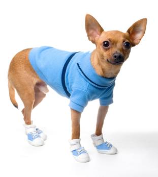 Chihuahua Paw-Wear
