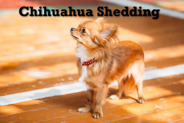 sheds dog how shedding to with wellness remedies home prevent