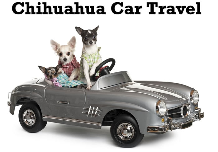 Chihuahua car travel