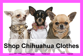 chihuahua-clothes-shop