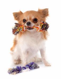Prevent Dog Nail Biting