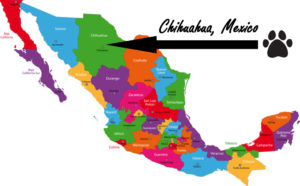 chihuahua-mexico3