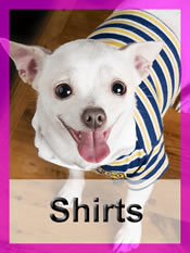 Shop Chihuahua shirts