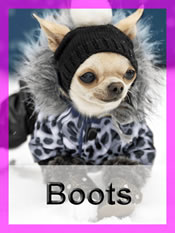 Shop Chihuahua boots