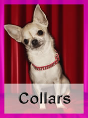 Shop Chihuahua collars
