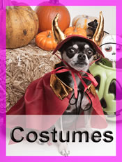 Shop Chihuahua costumes