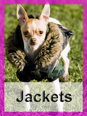 Shop Chihuahua jackets