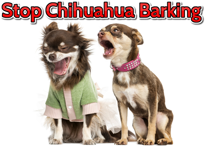 Stop Chihuahua from Barking